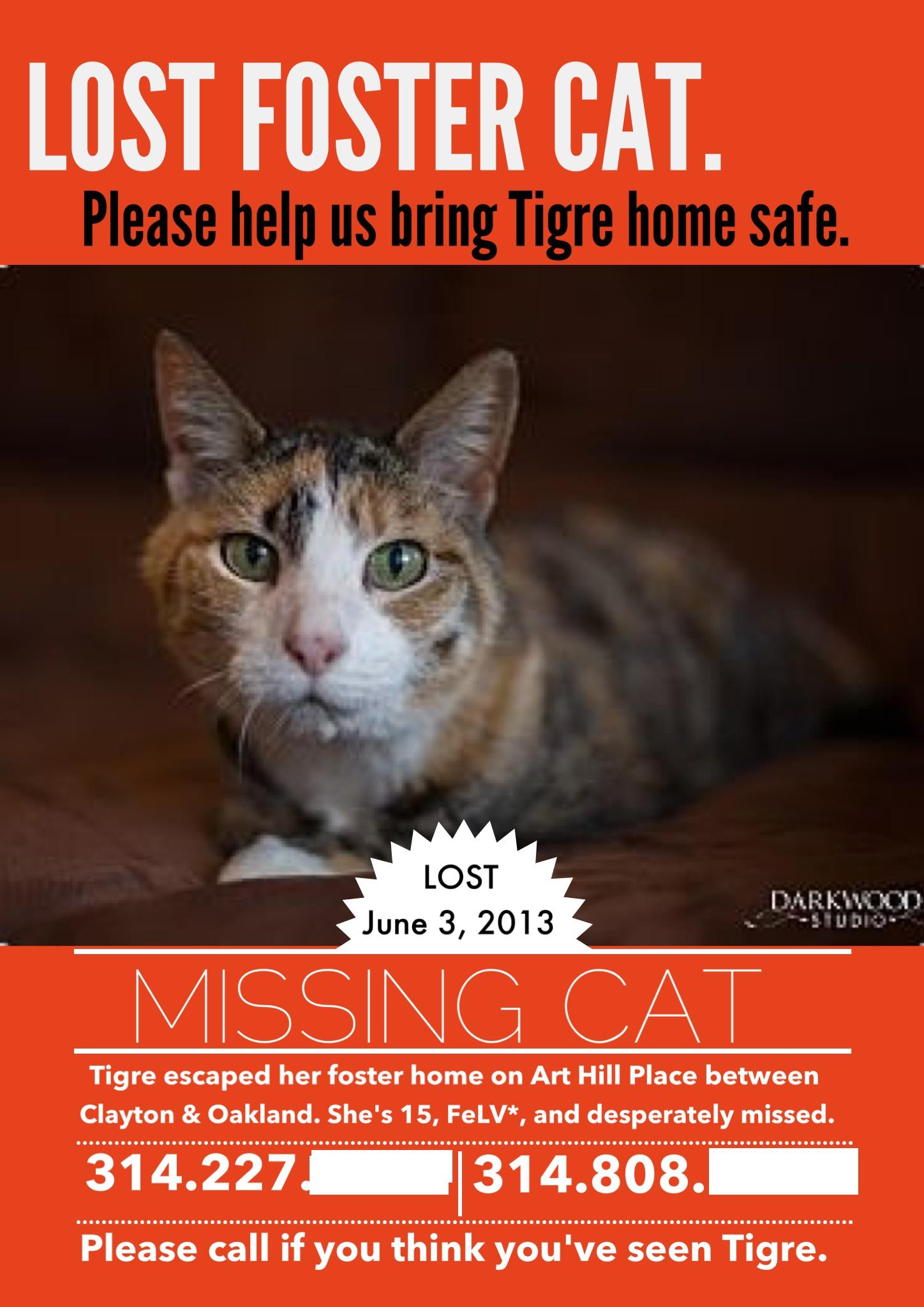 Lost Cat Tips